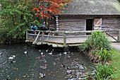 Duck pond, London Wetland Centre, Wildfowl & Wetlands Trust, Hammersmith, Great Britain
