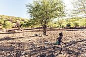 Himba boy and goat herd, Kunene, Namibia, Africa.