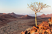 Lone tree high above the Krone Canyon to the left a car and a tent, Damaraland, Kunene, Namibia