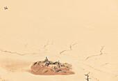 Acacia skeletons in the Deadvlei clay pan, Sossusvlei, Namib Naukluft National Park, Hardap, Namibia, Africa.