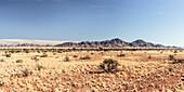 Sossusvlei, Namib Naukluft National Park, Hardap, Namibia, Africa.