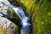 Waterfall, mossy canyon, clean green, nobody, South Island, New Zealand