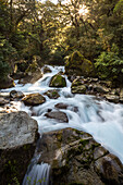 waterfall, cascade, forest, Lake Marian Track, nobody, Fiordland, South Island, New Zealand
