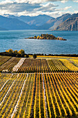 Rippon Vineyard, organic wine, golden autumn, shores of Lake Wanaka, nobody, Otago, South Island, New Zealand