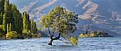Lone tree of Lake Wanaka, Otago, South Island, New Zealand, Oceania