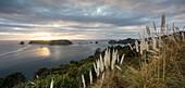 Küstenlandschaft in der Dämmerung, Hahei, Whitianga, Thames-Coromandel District, Coromandel Peninsula, Nordinsel, Neuseeland, Ozeanien