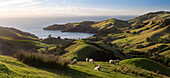Coromandel, Hauraki Gulf, Thames-Coromandel District, Coromandel Peninsula, North Island, New Zealand, Oceania