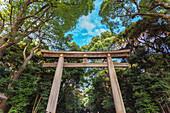 Ichi-no-Torii des Meiji Schrein, Shibuya, Tokio, Japan