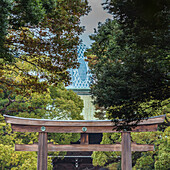Inner Torii with roof of Meiji Shrine and Cocoon Tower in background, Shibuya, Tokyo, Japan