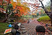 Maler im Koishikawa Korakuen Garten im Herbst, Bunkyo-ku, Tokio, Japan