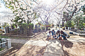 Women with dressed cute small dogs under cherry blossoms at Aoyama Cemetery, Roppongi, Tokyo, Japan