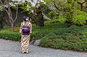 Young Japanese woman in kimono taking photo of cherry blossom at Happo-en, Minato-ku, Tokyo, Japan