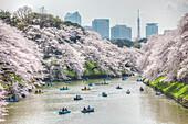 Menschen mit Tretbooten am Chidori-ga-fuchi erfreuen sich an Kirschblüte im Frühling, Chiyoda-ku, Tokio, Japan