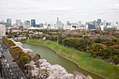 Higashi-Koen in spring with moat, skyscrapers and Tokyo Skytree in the background, Chiyoda-ku, Tokyo, Japan