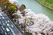 Kirschblüte am Wassergraben beim Kaiserpalast, Chiyoda-ku, Tokio, Japan
