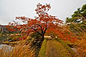 Colorful tree in Rikugien Garden in Autumn, Taito-ku, Tokyo, Japan