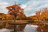Around a pond of Yoyogi Park in autumn, Shibuya, Tokyo, Japan