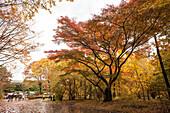 Entrance of Ni-No-Maru Garden of Imperial Palace in autumn, Chiyoda-ku, Tokyo, Japan