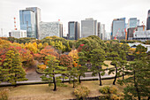 View from secret viewpoint in Honmaru Garden of Imperial Garden, Chiyoda-ku, Tokyo, Japan