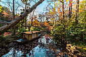 Small pond with boat at garden at Nezu Museum in autumn, Minato-ku, Tokyo, Japan