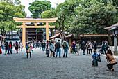 People in front of brand new Inner Torii of Meiji Shrine, Shibuya, Tokyo, Japan
