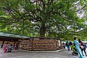 Women in kimono below a tree at inner yard of Meiji Shrine, Shibuya, Tokyo, Japan