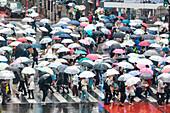 Famous pedestrian zebra crossing in Shibuya with many umbrellas, Tokyo, Japan