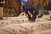 Tuna buyer checking fish before auction at Tsukiji Fish Market, Chuo-ku, Tokyo, Japan