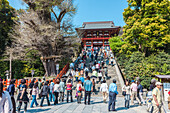 Stairs in front of Hachimangu Shrine in Kamakura, Kanagawa Prefecture, Japan