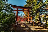 Torii with Mt. Fuji at Arakurayama Sengen Park, Fujiyoshida, Yamanashi Prefecture, Japan
