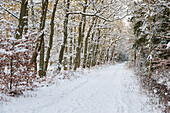Forest, Trail, Winter, Snow, Stroll, Baltic Sea, Darss Forest, Germany