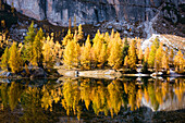 Bergsee, Spiegelung, Herbst, Laubfärbung, Lago Federa, Dolomiten, Italien