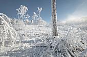 Raureif in the Wienerwald, Badener Lindkogel, Lower Austria, Austria
