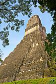 Maya Ruins - Temple of the Great Jaguar (Templo del Gran Jaguar), Tikal National Park, Guatemala, UNESCO.