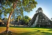 Maya Ruins - Temple of the Great Jaguar or Templo del Grand Jaguar, Tikal National Park, Yucatan, Guatemala, UNESCO.