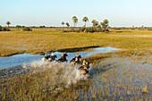 Horseback riding safari with African Horseback Safaris. Okavango Delta. Botswana.