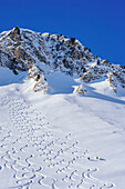 Two persons backcountry skiing descending through powdersnow, Rotwand, Spitzing, Bavarian Alps, Upper Bavaria, Bavaria, Germany