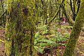 Laurel forest, Laurisilva, Garajonay National Park, tramper, Unesco World Heritage, La Gomera, Canary Islands, Spain