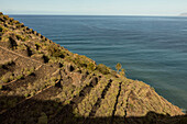 terrace farming, Atlantic Ocean, La Gomera, Canary Islands, Spain