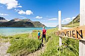 Hikers on footpath in between the green meadows and turquoise sea, Strandveien, Lofoten Islands, Norway, Scandinavia, Europe