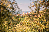 Europe, Italy, Umbria, Perugia district, Spello