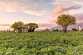 Europe, Italy, Umbria, Perugia district, Spello, Countryside