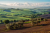 Europe, Italy, Tuscany hills in Orcia valley, province of Siena, Tuscany