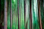 artistic blur of trees, piacenza, Emilia Romagna, italy