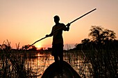 Silhouette of a man poling a Mokoro against the sunset. Mokoros are the main mean of transportation over the shallow waters of the channels in the Okavango Delta. Local tribes living in the Delta have been using them for centuries. Before they used to bui