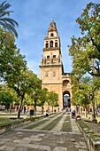 Cathedral, Old arab mosque, Patio de los naranjos, Cordoba, Region of Andalusia, Spain, Europe.