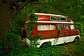 Foliage growing on abandoned camper van in forest
