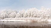 Plain Piedmont, Piedmont, Turin, Italy, Hoar frost trees on the Po river