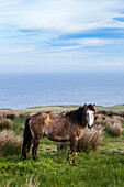 Horse in the countryside, County Clare, Ireland, Europe