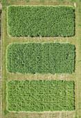 Full frame aerial view of crops growing in field, Stuttgart, Baden-Wuerttemberg, Germany